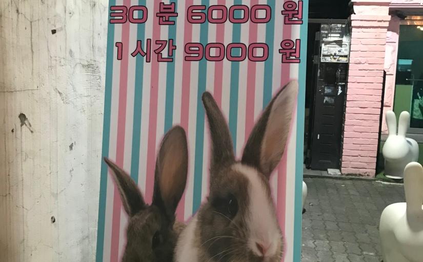 Bunny Cafe – Le café qui a du lapin!